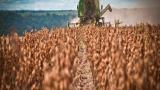 Piauí terá maior safra da história, com 4,42 milhões de toneladas de grãos