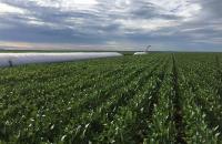 Cerrados do Piauí se preparam para produzir 7 milhões de toneladas de grãos