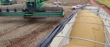 Piauí vai colher quase 3 milhões de toneladas de soja