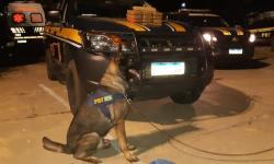Com ajuda de cães farejadores, PRF apreende munições, maconha e pasta base de cocaína avaliada em R$ 1,1 milhão em Teresina