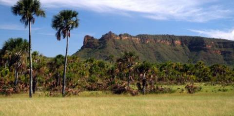Como as raízes do Cerrado levam água a torneiras de todas as regiões do Brasil
