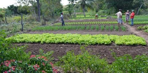 IFPI Corrente divulga edital para aquisição de alimentos da agricultura familiar