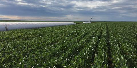 Produtores de soja do Piauí discutirão formas de aumentar a lucratividade do negócio