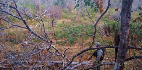 CRIME AMBIENTAL: Polícia Militar apreende 519 toras de Aroeira em área de desmatamento ilegal em Curimatá