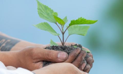 Projeto do Governo do Estado prevê o plantio de uma árvore em memória de cada vítima da Covid-19