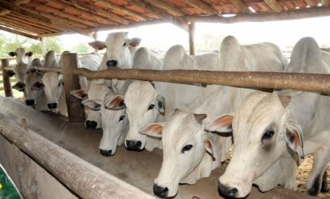 Pecuária piauiense cresce com o fim das barreiras sanitárias
