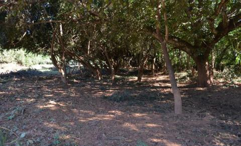 Superintendência de Meio Ambiente realiza a limpeza das margens do Rio Corrente