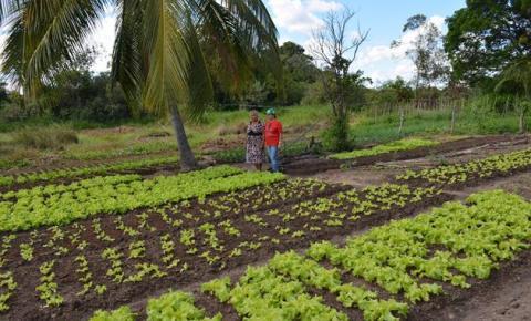 Pequenos produtores rurais de Corrente garantem renda através do Programa de Aquisição de Alimentos