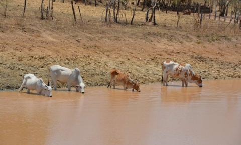 Barragens comunitárias de Corrente garantem sobrevivência de animais e mantém o homem no campo