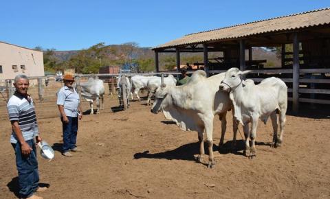 Secretaria de Desenvolvimento Rural de Corrente faz entrega de reprodutores e novilhas às associações