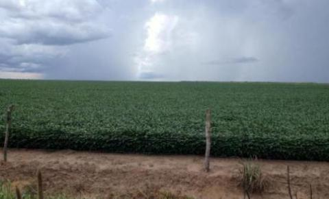 Chuvas regulares desde dezembro indicam safra agrícola recorde em Santa Filomena