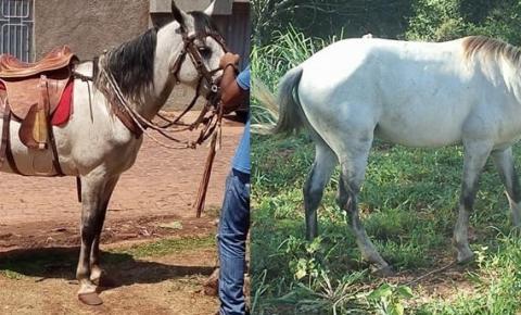 Dois cavalos foram furtados na noite desta segunda em Corrente