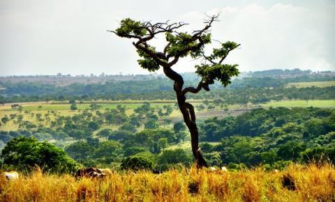 Programa de Investimentos em Florestas atenderá 4 mil propriedades do Cerrado