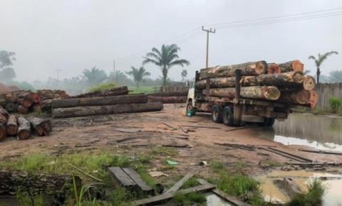 PF prende vereador e mais nove no Piauí por comércio ilegal de madeira