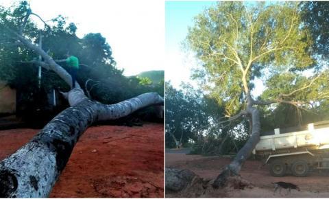 Árvore cai na rede elétrica e São Gonçalo do Gurgueia fica sem energia