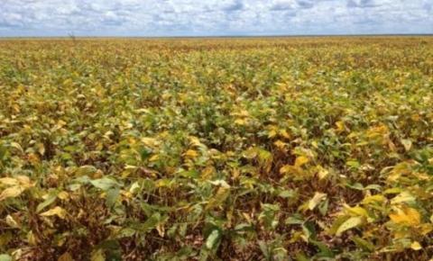 Santa Filomena se mantém como o quinto maior produtor de soja do Piauí