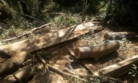 Semar embarga áreas de desmatamento e extração ilegal de madeira em Parnaguá