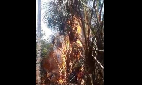 Brejo com nascentes pega fogo no Morro Redondo em Corrente