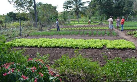 Agricultores de Cristalândia do Piauí  vão receber o Garantia-Safra em outubro
