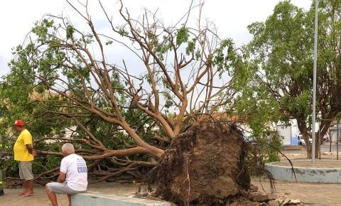 Tempestade arranca árvores, destelha casas e causa prejuízos em Curimatá