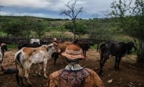 Câmara dos Deputados vai debater denúncias de violência contra geraizeiros na região do Matopiba