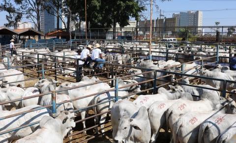 CFM venderá 400 reprodutores Nelore CEIP em 05.10 pelo sistema BullTrade, com valor indexado à arroba do boi gordo