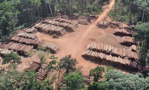 PF apreende 43,7 mil toras de madeira nativa ilegal no Pará, a maior da história