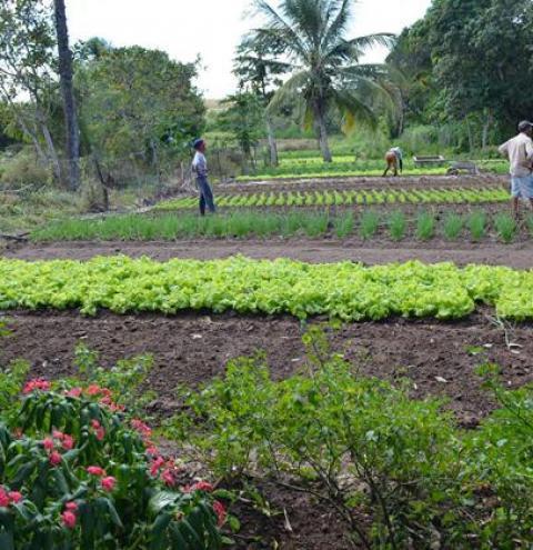 Pelo quarto ano consecutivo agricultores de Corrente são beneficiados com o Garantia Safra