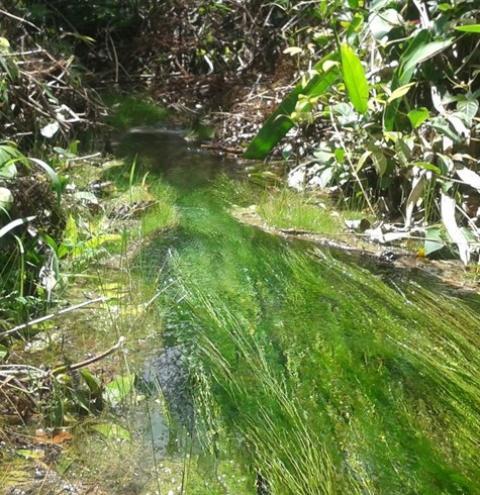 Expedição avalia brejos e nascentes do Rio Paraim e visita erosão na serra da Chapada das Mangabeiras