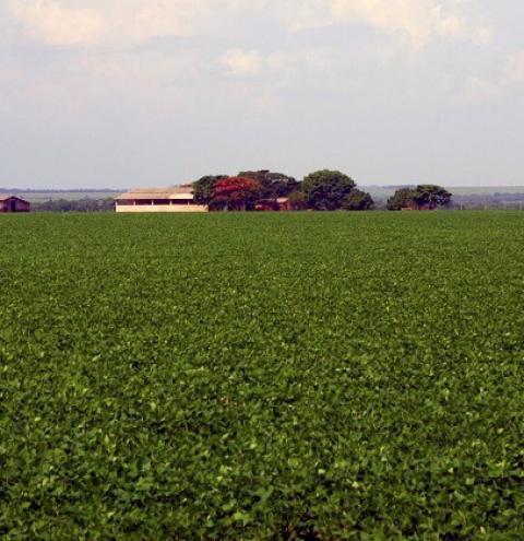 Ministério da Agricultura publica Plano de Ação para o Nordeste