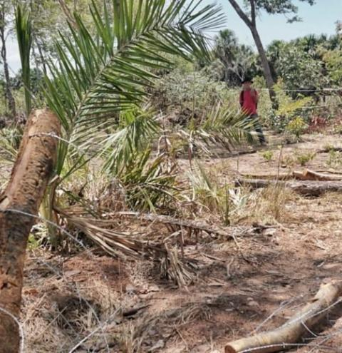 Comunidade Brejo do Miguel sofre ataque em Gilbués
