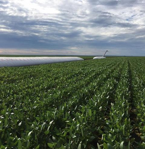 Aprosoja Brasil estima safra recorde de soja em 2020/21: 127,57 milhões de t