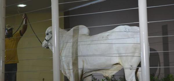 Unidade de Reprodução Animal e Melhoramento Genético será instalada em Corrente