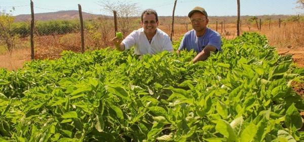 Agricultores do sertão aproveitam água para cultivar horta orgânica